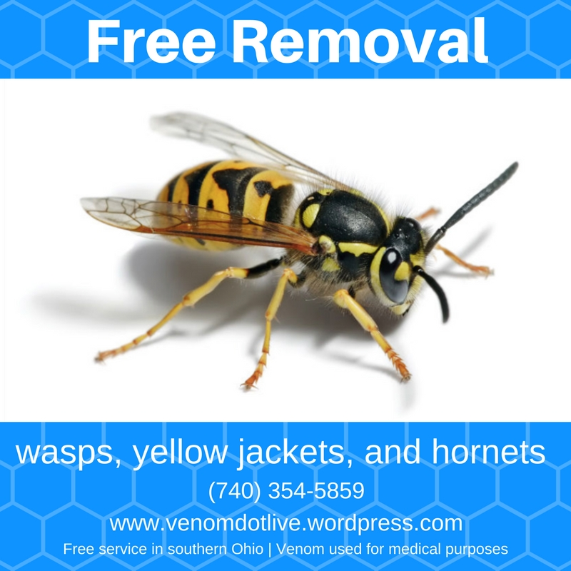 free yellow jacket yellowjacket removal exterminator pest control