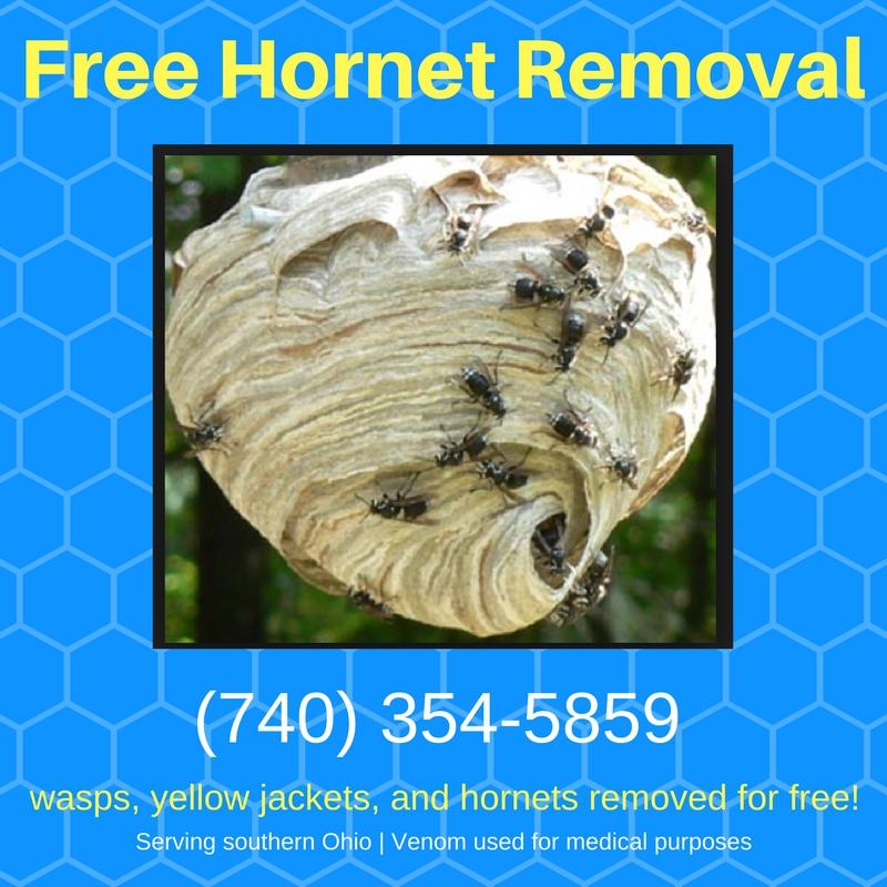 Hornets: