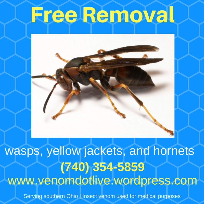 free extermination removal wasps yellow jackets hornets